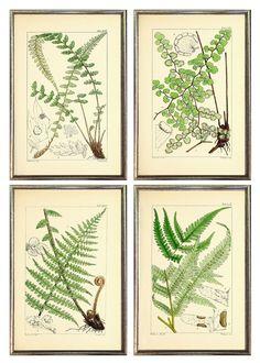 Framed Antique Ferns Prints Wall Grouping 4 — MUSEUM OUTLETS Vintage Botanical Prints, Botanical Drawings, Wall Groupings, Frames On Wall, Wall Prints, Fine Art Prints, Art Nouveau Illustration, Plant Art, Unique Wall Art