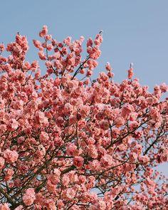 Nature Aesthetic, Spring Aesthetic, Flower Aesthetic, Aesthetic Images, Aesthetic Backgrounds, Aesthetic Iphone Wallpaper, Aesthetic Wallpapers, Cute Wallpaper Backgrounds, Pretty Wallpapers
