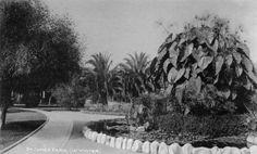 An early view of St. James Park in West Adams. Courtesy of the Photo Collection, Los Angeles Public Library.