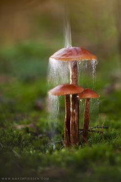 11 MAY Protection by Maxim Piessen--mpke-- on Mushroom Art, Mushroom Fungi, Mushroom Lights, Wild Mushrooms, Stuffed Mushrooms, Photo Macro, Slime Mould, Plant Fungus, Fotografia Macro