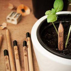 Lápices sustentables que se convierten en plantas | La Bioguía