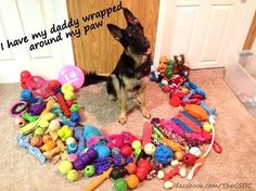 if you buy your dog their own toys and let them do whatever they want with them, it increases the likelihood that they will leave things which don't belong to them alone.