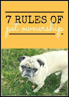 We miss this pug, but still believe in these rules of pet ownership!