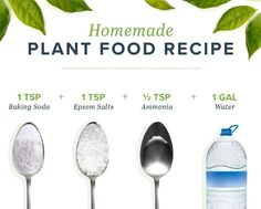 homemade plant food recipe Sometimes plants get hungry after it's used up all its soils nutrients. Thankfully, you can make homemade plant food to keep your plant happy and healthy! Homemade Plant Food, Homemade Fertilizer For Plants, Organic Fertilizer, Inside Plants, Plant Health, House Plant Care, Growing Plants, Growing Herbs Indoors, Organic Gardening