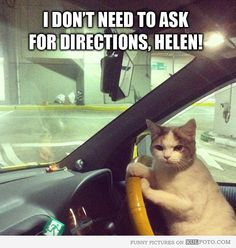 Cat driver: I don't need to ask for directions!