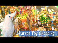 PARROT TOY SHOPPING! Parrot store tour vlog - YouTube Parrot Toys, Bird Toys, Toys Shop, New Toys, Dollar Stores, The Creator, Birds, Pets, Youtube