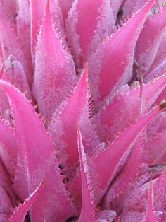 Pink Cactus by Nikki Smith