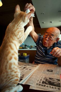 Everything changed when this older man met a kitty named Kinako.
