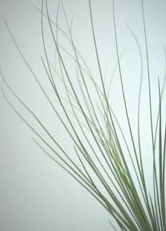 Cadence #displate #home #house #decoration #art #mariamoreno #nature #flower #canvas #metal #livingroom #vintage #blur #plant #seascape #plants#melancholic