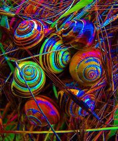 http://thestonerdiaries.files.wordpress.com/2011/02/snails.jpg