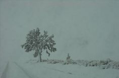 Lancaster, CA : Snow and the Joshua Tree
