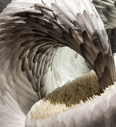 feather sculptures by kate mccgwire