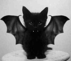 Vamp kitten