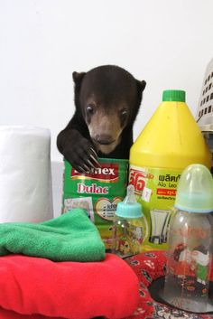 Subscribe to support Free the Bears. Subscriptions this month provide Cub Care packs for bears rescued from exploitation around the world.