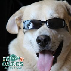 *****Great news*****  Get those voting fingers ready, we have been entered for a chance to win $500.00 in this years DGP for Pets For A Cause contest. Vote once a day (every 24 hrs) between August 2nd and August 8th, 2016.   We were one of 3 great groups and won $500.00 in 2015. We have over 6k followers now. If all of our great followers vote, we can do this again. Please tell a friend to vote starting August 2nd.