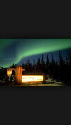 Aurora borealis Denali National Park Alaska. Sickest place I've ever been to
