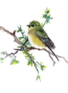 Bird art- original watercolor painting, American Goldfinch 12 x 9 in, birds and flowers minimalist wall art, olive green wall art by ORIGINALONLY on Etsy