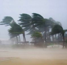 Water Spout, Wild Weather, Windy Day, South Florida, Palm Trees, Succulents, The Incredibles, Pure Products, Landscape