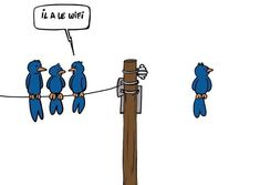 funny puns - Wifi is the Word Geeks, Eagles, Georg Christoph Lichtenberg, Funny Birds, Humor Grafico, Just For Laughs, Le Mans, Laugh Out Loud, The Funny