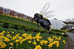 Giant bee at Eden Project perches on a hill aside the biomes in Cornwall, England