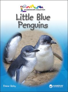 pin by dyan bernstein on penguins i have known and loved ... little penguin diagram