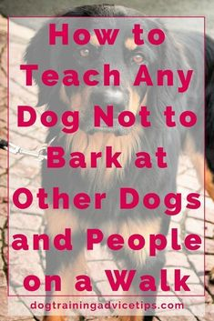 How to Teach Any Dog Not to Bark at Other Dogs and People on a Walk | Dog Training Tips | Dog Obedience Training | Dog Training Ideas | http://www.dogtrainingadvicetips.com/teach-dog-not-bark-dogs-people-walk