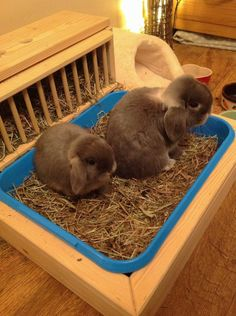 Rabbits United Forum litter box hay bin