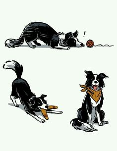 Astounding Border Collie Dog Tips Ideas I Love Dogs, Cute Dogs, Border Collie Art, Dog Illustration, Illustrations, Collie Dog, Dog Art, Animal Drawings, Drawings Of Dogs