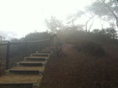 Torrey Pines. Fog on stairs.