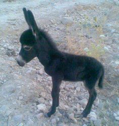 baby donkey in Patmos, Greece