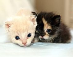 """""""Casper and Wendy were rescued by a couple who found them in their backyard. The mom had abandoned her kittens so they took them in and cared for them until a cat rescue volunteer brought them to us. While their three siblings did not make it, Casper and Wendy thrived to become the cuddliest and snuggliest kittens!"""