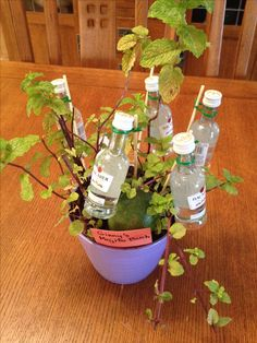 Mojito Bush! Retirement gift for a mojito lover - plant mint in a nice pot, wire tiny rum bottles onto skewers with twist ties and stick into the pot, and add a lime!