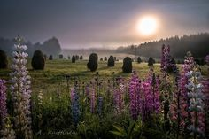 Finnish country side by Asko Kuittinen Finland Summer, Summer Dream, Summer Time, Stars At Night, Great Shots, Beautiful Gardens, Wild Flowers, Countryside, Tourism