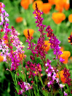467 Best Annual Plants Images In 2020 Plants Annual Plants