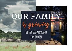 Tongabezi and Green Safaris are continually evolving in order to move forwards as the best possible versions of ourselves. Safari Wedding, Growing Greens, Becoming A Teacher, Remain The Same, Very Excited, Smile Face, Need To Know, The Dreamers, Traveling By Yourself