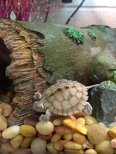 Baby turtle. Mississippi map turtle