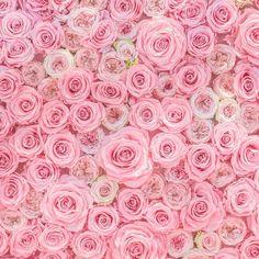 La vie en rose  by paulinefashionblog