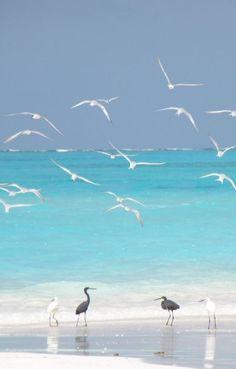 birds & beach Expression