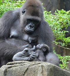 Mom taking care of her tiny baby with delicate motions...Amazing...