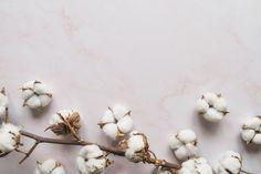 Miből készül a pamut? - Your Style Guide Gold Wallpaper Background, Mac Wallpaper, Flower Wallpaper, Wallpaper Backgrounds, E Flowers, Cotton Clouds, Cotton Plant, Flat Lay Photography, Vector Photo