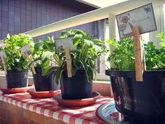 Herb Garden Ideas For A Balcony cd rack turned balcony herb garden | balcony herb gardens, herbs