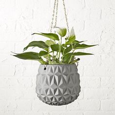 Give everyone green envy with modern planters and garden pots. Shop indoor and outdoor plant holders such as hanging pots, rail planters and more. Hanging Plants Outdoor, Indoor Plant Wall, Outdoor Planters, Diy Hanging, Hanging Planters, Indoor Plants, Planter Pots, Indoor Garden, White Planters