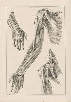 Anatomie van de arm, de hand en de schouder, Jacob van der Schley, 1762