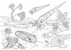 Omalovánky: Oživlý svět zkamenělin: Omalovánky z prehistorického období Země od prvohor do čtvrtohor. omalovanky, coloring book, nature, dějepis, příroda, zvířata, dinosauři, dinosaurs, historie, pravěk, prvohory, druhohory, třetihory, čtvrtohory