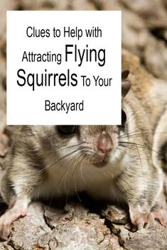 Clues to Help with Attracting Flying Squirrels To Your Backyard Cute Creatures, Magical Creatures, Natalie Duran, Flying Squirrel Pet, Jason Beghe, Wood Animal, Deciduous Trees, Nesting Boxes, Backyard Birds