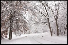 """Visual #BibleVerseoftheDay: Psalm 25:10 and Two Squirrels Scamper Across a Snow Covered Road, Douglas County Nebraska. """"He leads the humble in justice, and He teaches the humble His way.…"""" CLICK THE PHOTO for the complete passage. http://visualverse.thecreationspeaks.com/humble-paths/"""