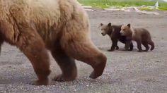 #Медведи на берегу среди людей! #Bears on the shore among the people.