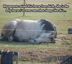 Funny animals photos with signs | #fun #horse #sleeping