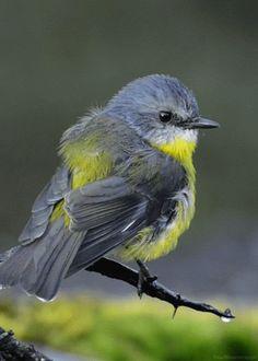 Gif imágenes de pájaros bellos y espectaculares en movimiento. Gif images of birds.