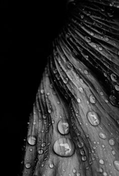 Droplets Out of Darkness - By Freddie Ardley Photography